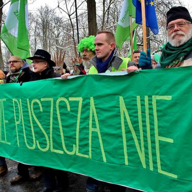 Puszcza Białowieska jest dobrem narodowym - zatrzymajmy jej bezpowrotną dewastację!