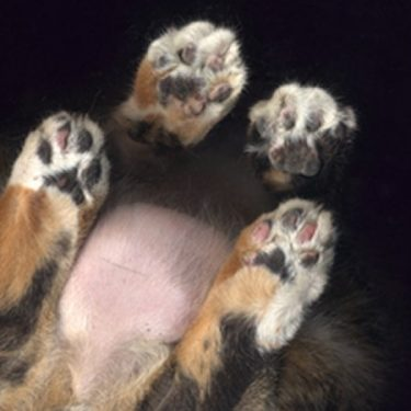 Odwracanie kota ogonem
