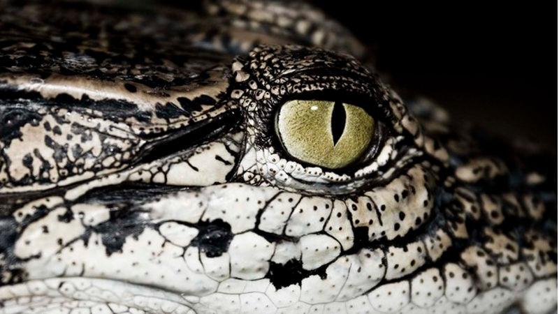 Krokodyle łzy nad Radomiem